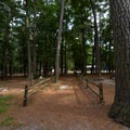 A walkway between campsites.- Trap Pond State Park Campground