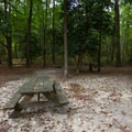 A campsite with a sandy floor.- Trap Pond State Park Campground