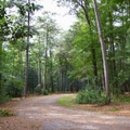 A road running through the campground.- Trap Pond State Park Campground