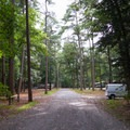 Another road running through the campground.- Trap Pond State Park Campground