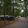A view of multiple campsites.- Trap Pond State Park Campground