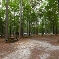 An example of a car and tent site.- Trap Pond State Park Campground