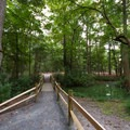 A walkway through the campground, traversing the swamp.- Trap Pond State Park Campground