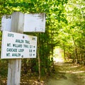 The trail starts on the Avalon Trail before splitting off.- Mount Willard Hike