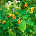 There are lots of wildflowers along the trail.- Pondicherry Wildlife Refuge