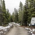 Loop C road at Lewis Lake.- Lewis Lake Campground