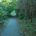 Rhododendron tunnel on the trail.- Brasstown Bald