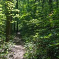 The portion on Coosa Backcountry Trail is narrow and the forest is dense.- Bear Hair Gap Trail