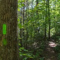 The route is marked with green blazes.- Bear Hair Gap Trail