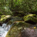 The trail crosses a few brooks that are good for cooling off.- Bear Hair Gap Trail