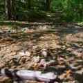 The trail crosses small streams in a few places.- Bear Hair Gap Trail