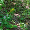 Flowers add lots of color to the trail.- Bear Hair Gap Trail