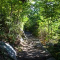 The final push through the forested trail. - Marys Rock