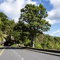 Marys Rock Tunnel, located just past the trailhead on Skyline Drive. - Marys Rock
