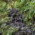 Short but rocky/slippery start.- Huckleberry Mountain via Boulder Ridge