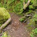 Several small stream crossings.- Huckleberry Mountain via Boulder Ridge