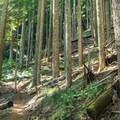 Along the trail to Huckleberry Mountain.- Huckleberry Mountain via Boulder Ridge