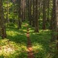 Meadow-like timberlands.- Huckleberry Mountain via Boulder Ridge