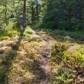 Vegetation becomes alpine-like near the summit.- Huckleberry Mountain via Boulder Ridge
