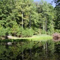 Carter's Pond.- Oak Ridge Campground CoA