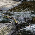 Quantico Creek.- Oak Ridge Campground CoA