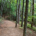 A trail circles around the lake in the forest.- Unicoi State Park + Lodge