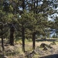 Typical campsite at Haystack Campground.- Haystack Campground (East Shore)