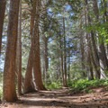 The trail enters forested stands of pine trees along the lakeshore.- Echo Lakes Trail