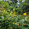 Wildflowers in Hot Springs National Park.- Hot Springs National Park