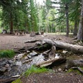 Lehman Creek runs along the campground, providing a nice ambience for campers in spots along the water.- Wheeler Campground