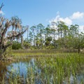 Salt marsh and maritime forest.- Sandpiper Loop Nature Trail