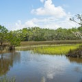 One of many views over the salt marsh.- Sandpiper Loop Nature Trail