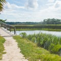 The Avian Loop is a bonus adventure that starts from the Nature Trail Loop.- Sandpiper Loop Nature Trail