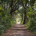 This historic road used to lead to Skidaway's ferry landing.- Big Ferry Loop + Observation Tower