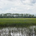 Salt marsh and a forested island far away.- Big Ferry Loop + Observation Tower