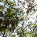 Don't forget to look up! The canopy is beautiful.- Big Ferry Loop + Observation Tower