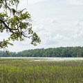 View across the Skidaway River.- Big Ferry Loop + Observation Tower