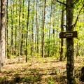 Signs mark the trail.- Natural Bridge Trail