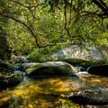 A view of Poe Creek.- Natural Bridge Trail