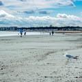 Looking south down the beach.- Pine Point Beach
