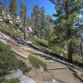 At points the trail is steep enough that crews have built steps to help with the climb.- Maggie's Peak