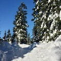 The trail starts by winding upward through forests and meadows.- Mount Seymour Snowshoe