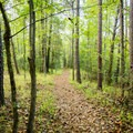 The Nature Trail in Croft State Park.- Nature Trail