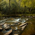 Fairforest Creek from the trailside.- Nature Trail