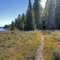 The site is up on the left when taking the south route of the loop trail.- Hermitage Point Backcountry Group Site