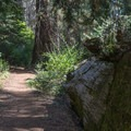 The trail is well maintained.- Redwood canyon via Hart tree