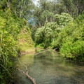 Kaukonahua Stream is wide, but not too deep, and will leave your shoes soggy.- Wahiawa Hills