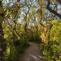 Forested trail.- Bretag Trail and Upper Central Garden Loop