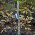 Bird near the trail.- Bretag Trail and Upper Central Garden Loop
