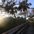 The boardwalk is built over the ancient shell mound.- Turtle Mound